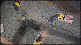 Rat Control of New York City NY